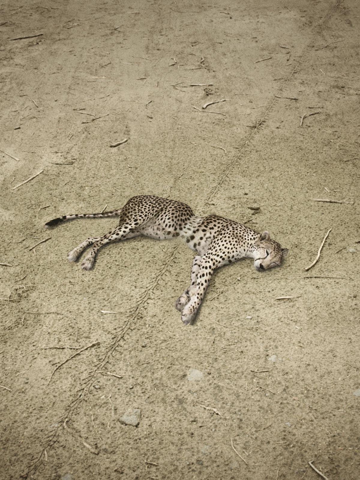 Vespa_Cheetah_Tall