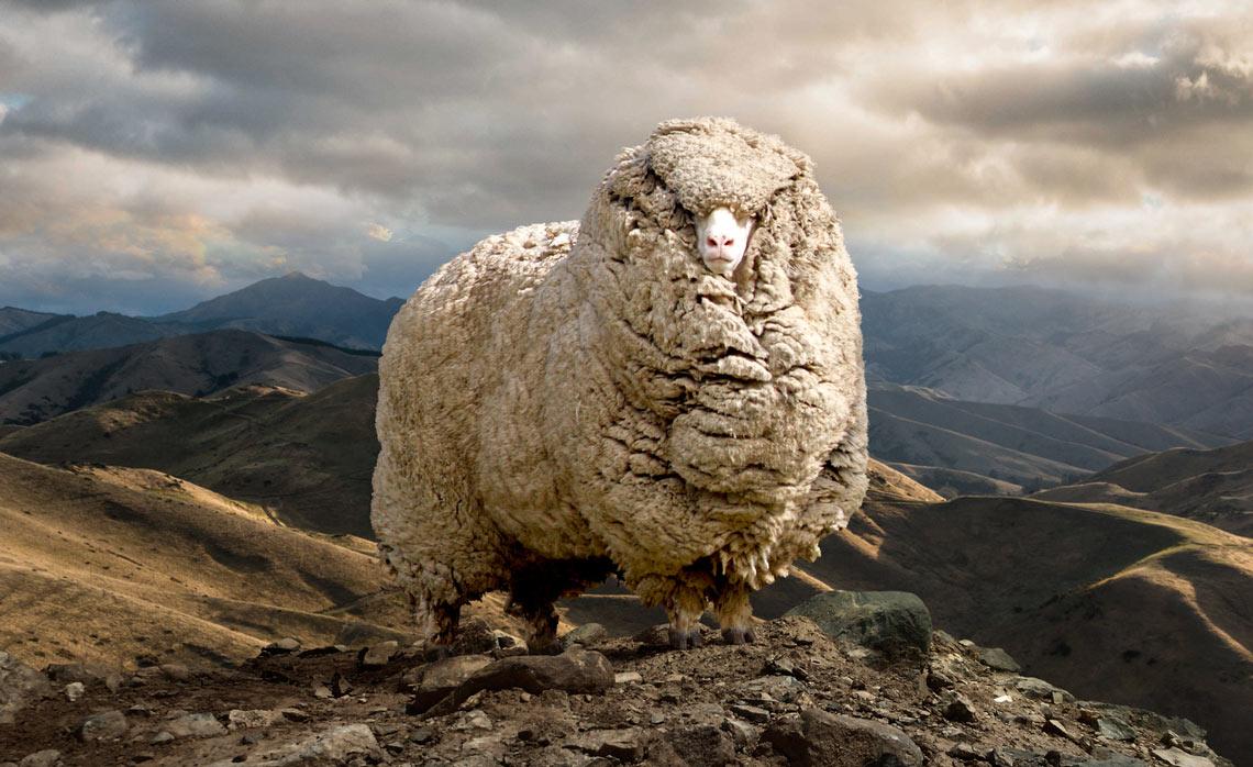 Skoda_Sheep